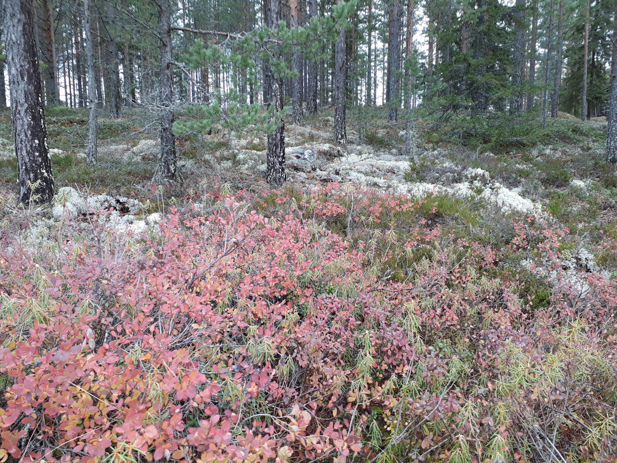 Retkipäivä Seitsemisen kansallispuistoon su 20.10.